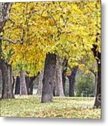 Landscape With Autumn Trees Metal Print