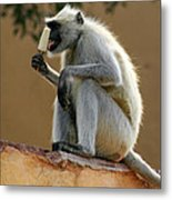 Langur With Kulfi Metal Print
