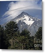 Lanin Volcano And Araucaria Trees Metal Print
