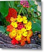 Lantana Flowers 2 Metal Print