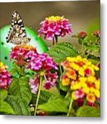 Lantana With Butterfly Metal Print