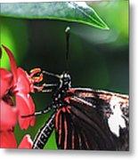 Laparus Doris Butterfly Metal Print
