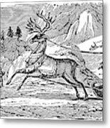Laplander, C1785 Metal Print
