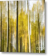 Larch Grove Blurred Metal Print