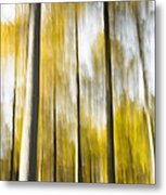 Larch In Abstract Metal Print