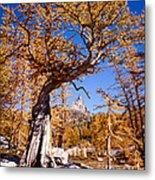 Larch Tree Frames Prusik Peak Metal Print