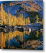 Larch Tree Reflection In Leprechaeun Lake  Metal Print