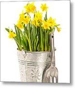 Large Bucket Of Daffodils Metal Print