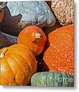 Large Edible Gourds Metal Print