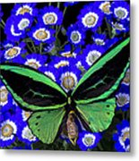 Large Green Butterfly Metal Print