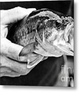 Large Mouth Bass Metal Print