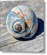 Large Snail Shell Metal Print