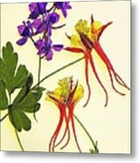 Larkspur And Columbine Metal Print