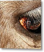 Lashes Metal Print by Diana Angstadt