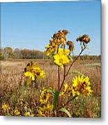 Last Blooms Before Fall Metal Print