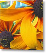 Last Holdouts Of The Season - Black Eyed Susans - Floral Photography Metal Print
