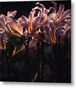 Last Light Lillies Metal Print