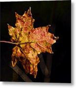 Last Maple Leaf Metal Print