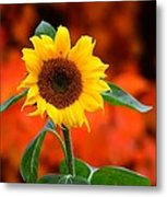 Last Sunflower Horizontal Metal Print