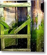 Late Afternoon Beauty Metal Print