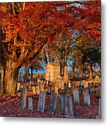 Late Afternoon Sun  Metal Print