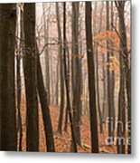 Late Autumn Beech Metal Print