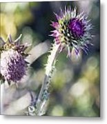 Late Bloomers Metal Print by Dana Moyer