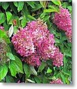 Late Hydrangea Flower Metal Print