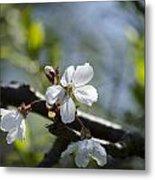 Late Spring Blossom Metal Print