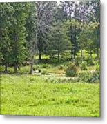 Late Summer By The Pond Metal Print