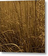 Late Summer Day In The Prairie Metal Print