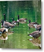 Late Summer Gathering Metal Print