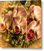 Late Summer Orchids Metal Print by Jill Balsam