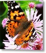 Late Summer Painted Lady Metal Print