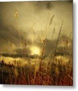 Late Summer Sun Through The High Grass Metal Print