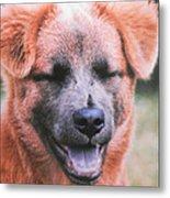 Laughing Dog Metal Print