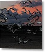 Laughing Gull Twilight Metal Print
