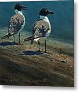 Laughing Gulls Metal Print