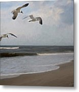 Laughing Gulls Over Nags Head Metal Print