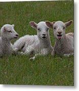 Laughing Lamb Metal Print