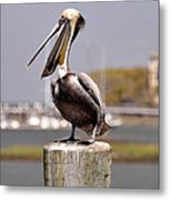 Laughing Pelican Metal Print