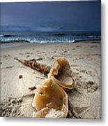 Laughing With A Mouth Full Of Sand Metal Print