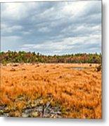 Laurel Summit State Park Bog Metal Print
