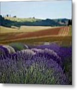 Lavendar Fields Forever Metal Print by Mamie Gunning