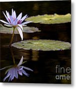 Lavendar Reflections In The Lake Metal Print