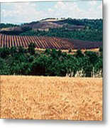 Lavender And Corn Fields In Summer Metal Print