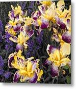 Lavender And Irises Metal Print