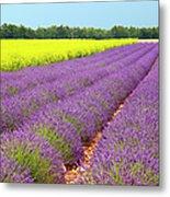 Lavender And Mustard Metal Print