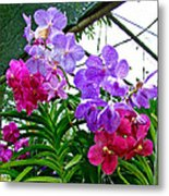 Lavender And Red Orchids At Maerim Orchid Farm In Chiang Mai-tha Metal Print