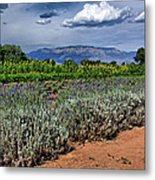 Lavender And Sunflowers Metal Print